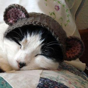 Pet_hat
