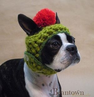 Dog_hat