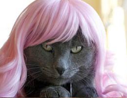 Kitty_wigs_2