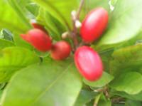 Berry_3